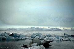 Icebergs-iceland