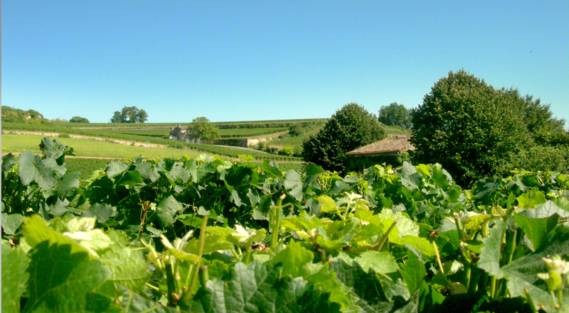 St-emilion-3_medium